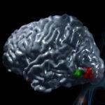 I neuroni che hanno plasmato la civiltà
